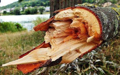 Kto odpowiada za szkodę wyrządzoną przez przewrócone na samochód drzewo – sprawa z praktyki sądowej SWS